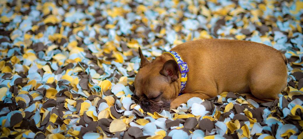 French Bulldog depression