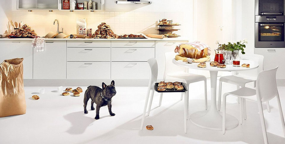 French Bulldog raw diet