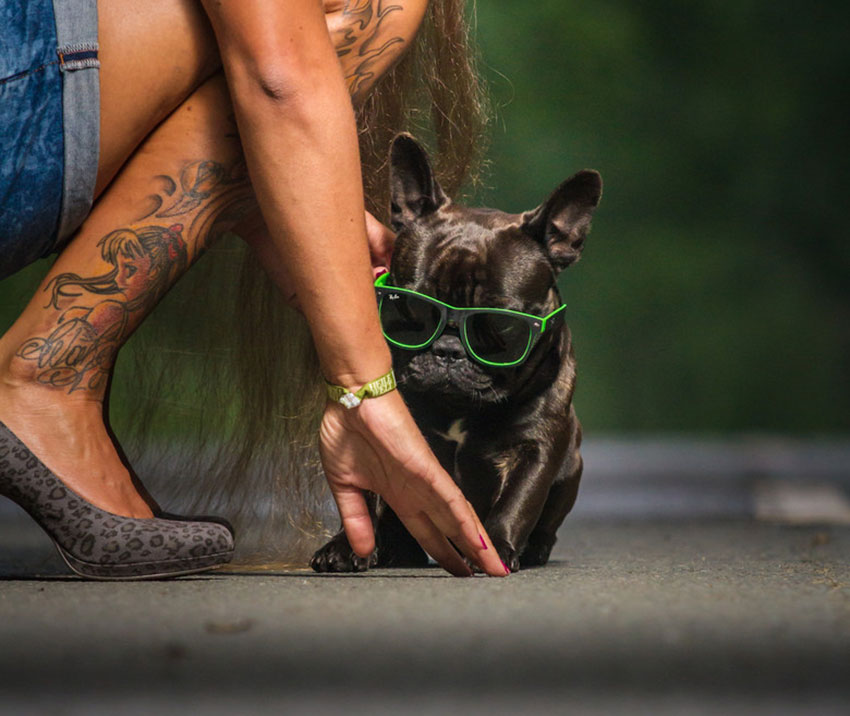 How to tell you are a French Bulldog owner 5