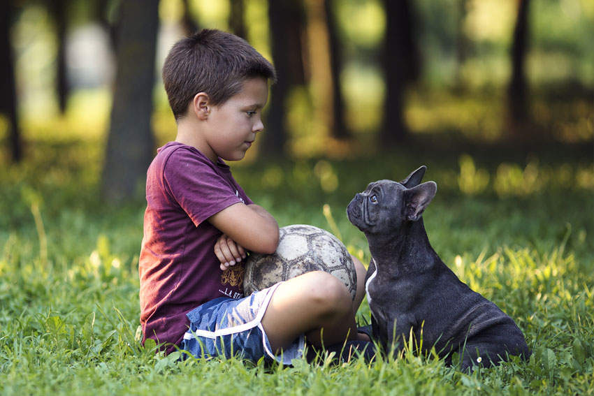 10 key tips for French Bulldog owners 1
