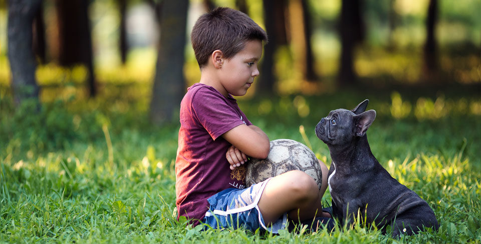 10 key tips for French Bulldog owners