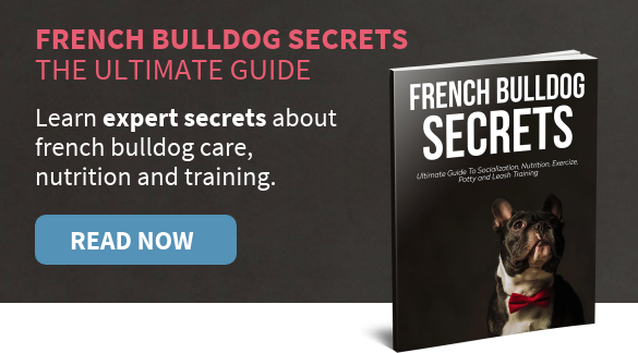 french-bulldog-secrets-book