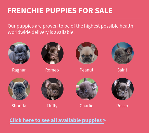 frenchie-puppies-for sale