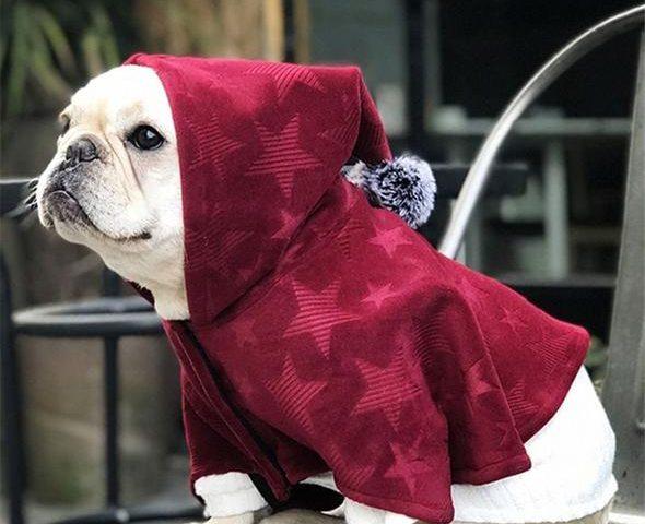 French Bulldog Hoodies Top 10 Best Selling Picks