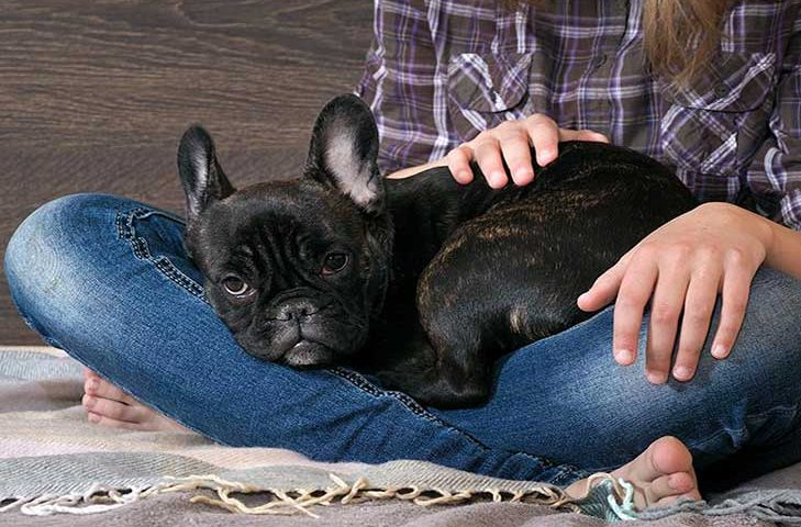 french bulldogs crate training