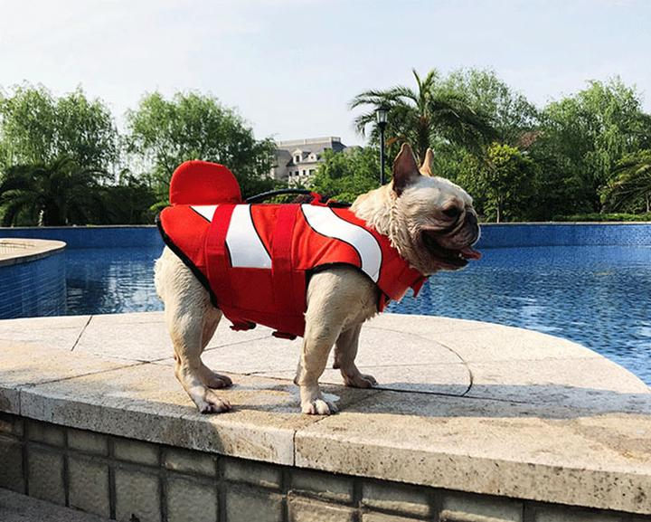 french bulldogs sink