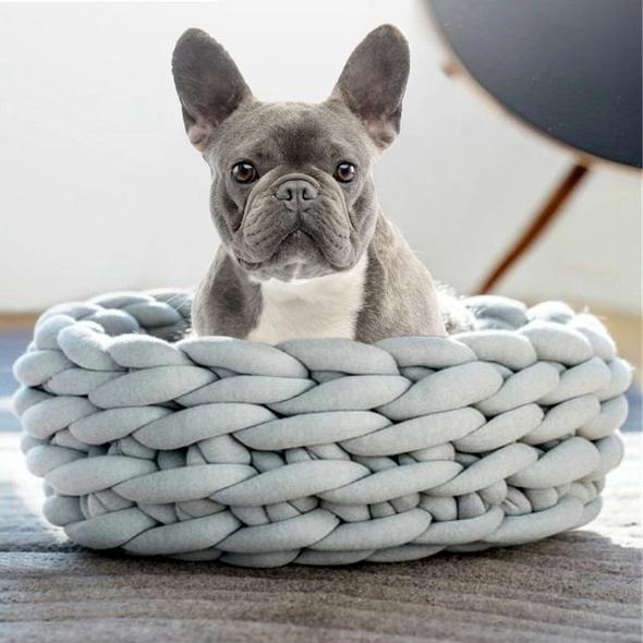 french bulldogs get cold