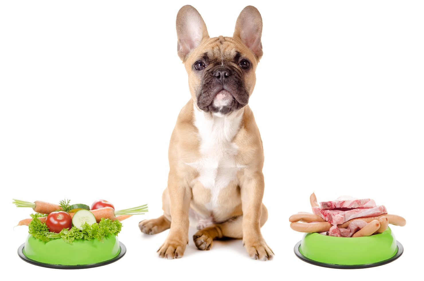 barf diet for french bulldogs