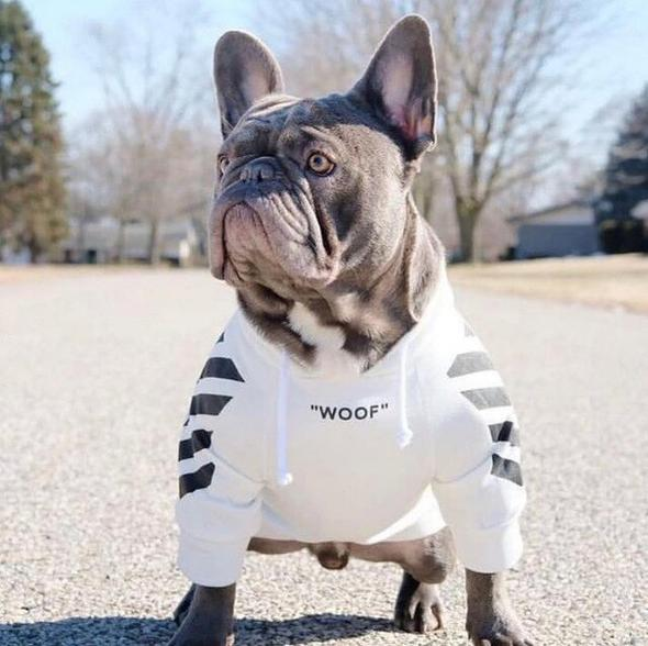 hoodies for french bulldogs