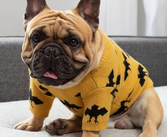french bulldog sweaters