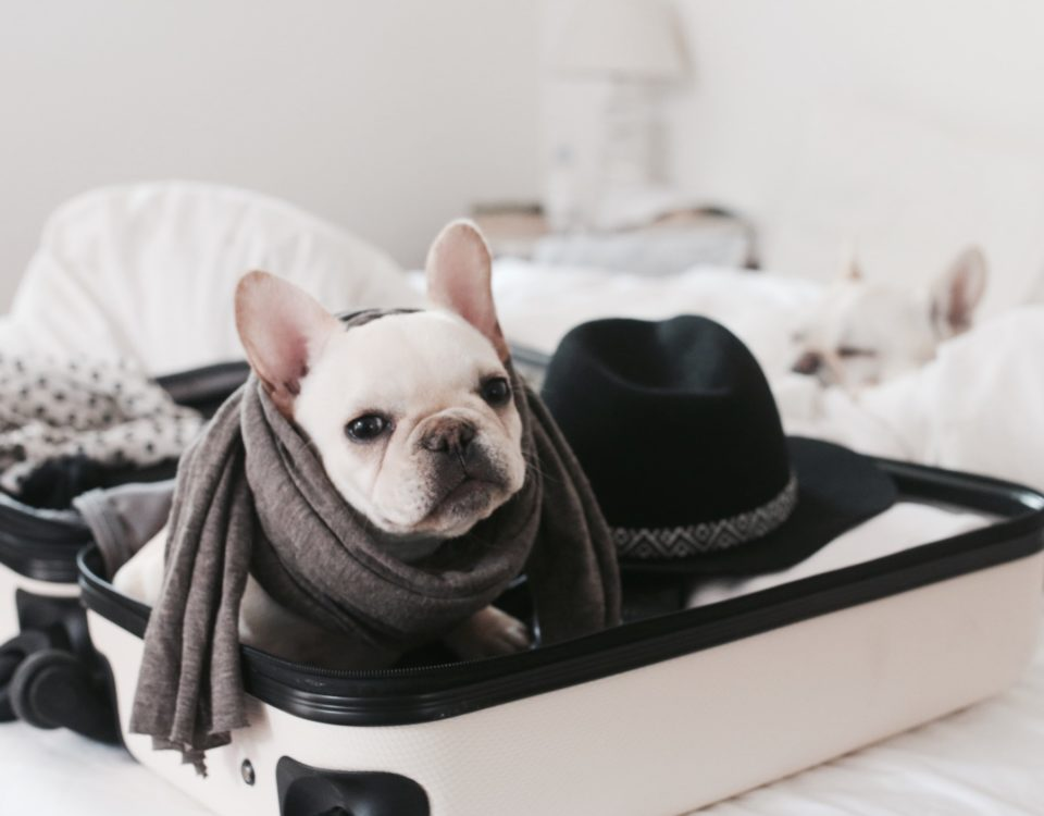 travel with a french bulldog
