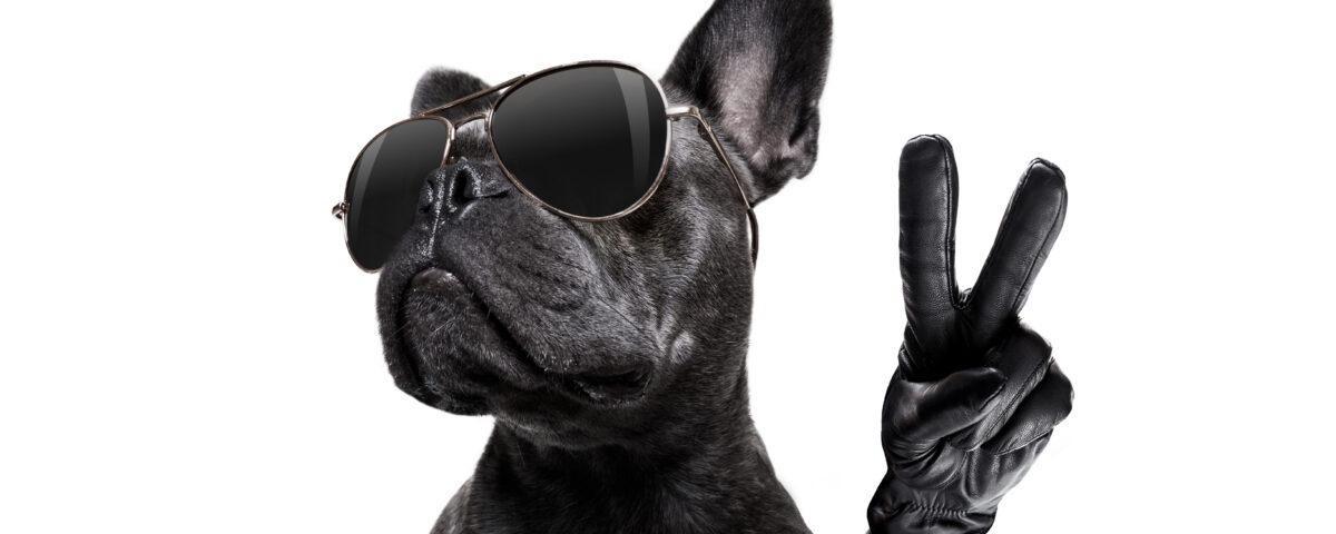 french bulldog gifts