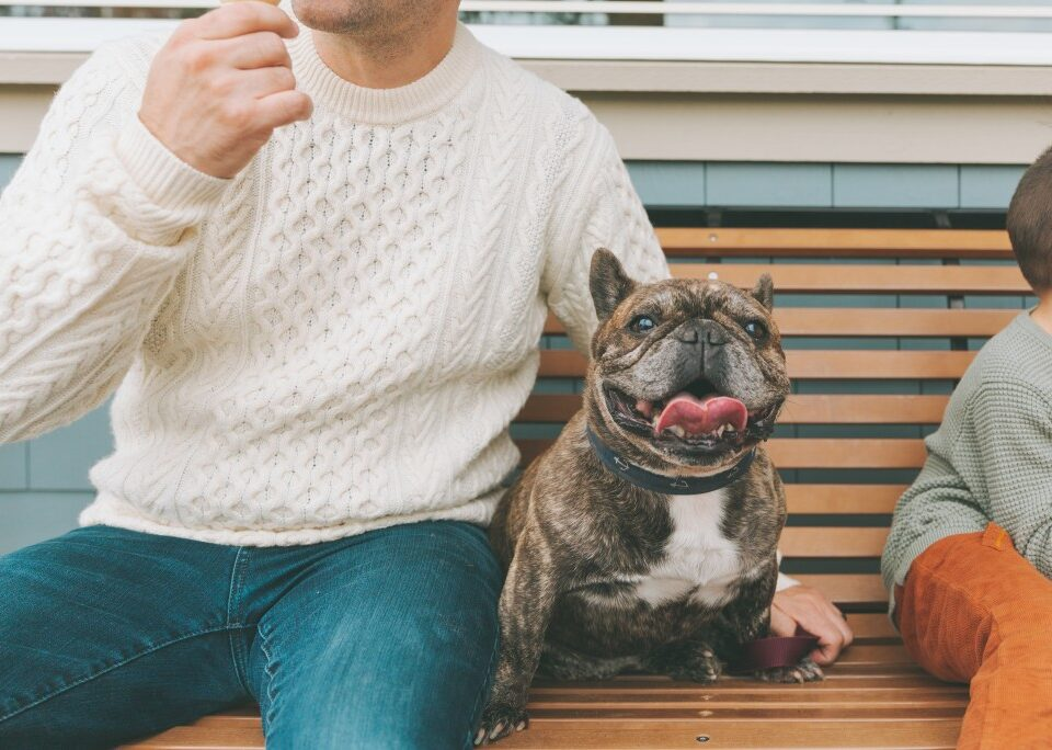 are french bulldogs jealous