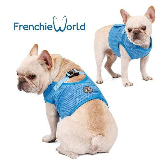 frenchie-world-soft-padded-harness-frenchie-world-shop-dog-accessories-648752824338_540x