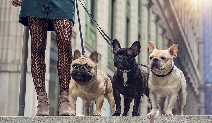 french bulldog behavior problems