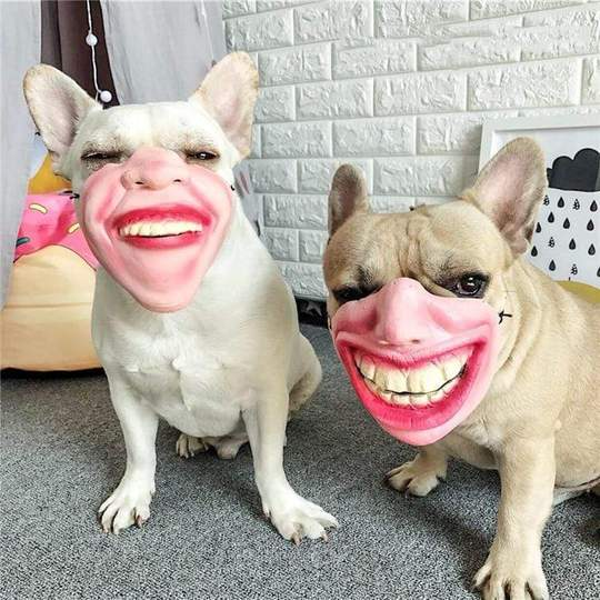 frenchie halloween costumes