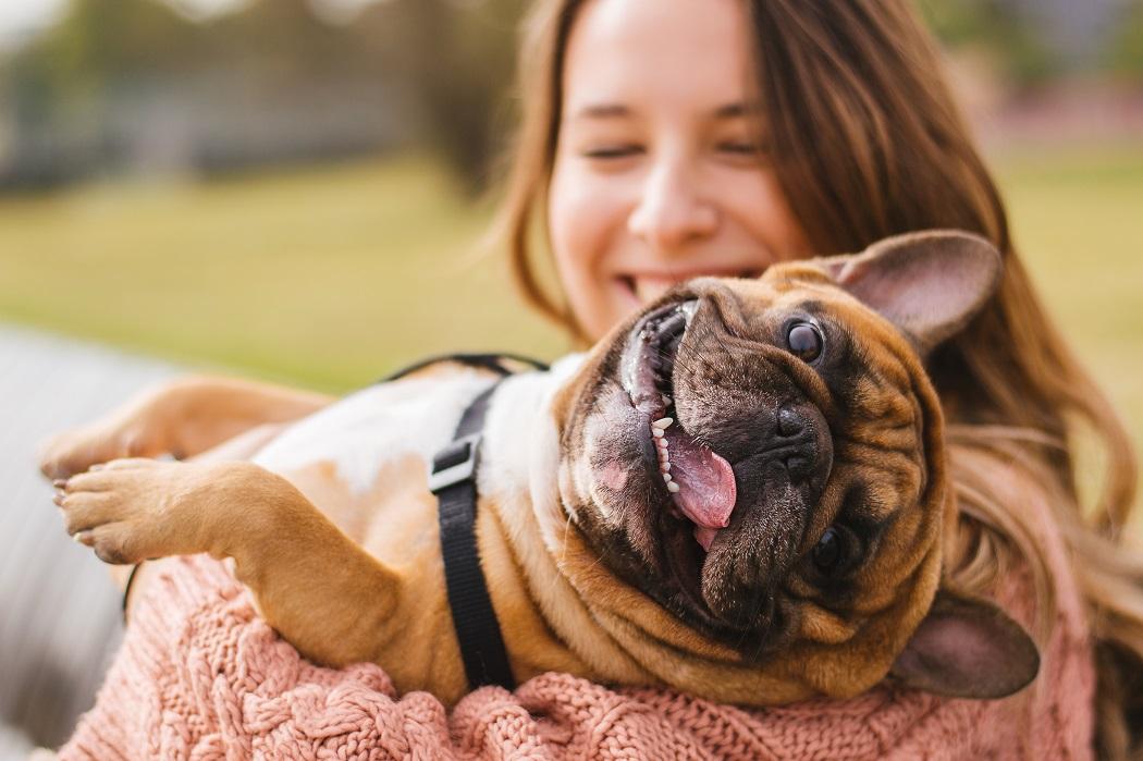 french bulldog breathing problems