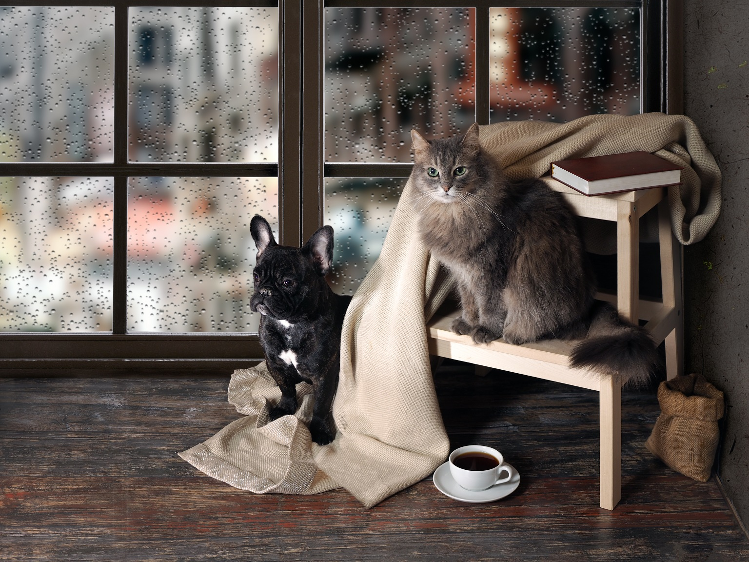 french bulldogs and cats